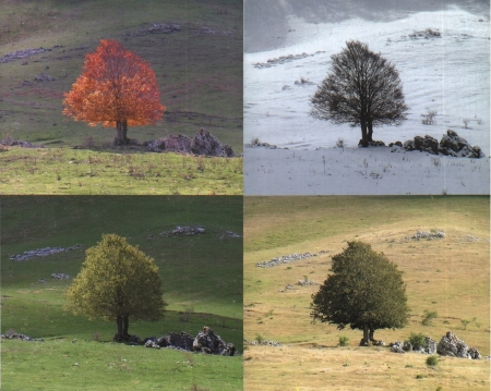 Seasons - season, winter, change, spring, summer, nature, autumn
