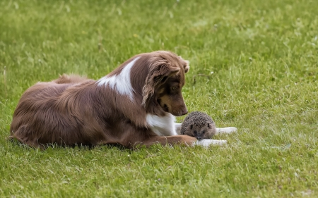 Friends - friend, hedgehog, green, arici, caine, couple, dog, animal