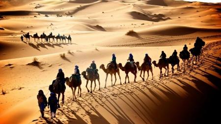 Caravan Of Camels Deserts Nature Background Wallpapers