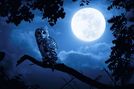 Owl in the night - owl, dusk, magic, tree, fantasy, moon, moonlight, evening, branches, enchanted, night