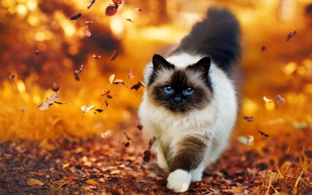 Autumn Cat Cats Amp Animals Background Wallpapers On