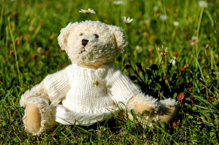 Teddy Bear on the Grass C - photo, teddy bears, photography, stuffed animals, wide screen, beautiful, toys