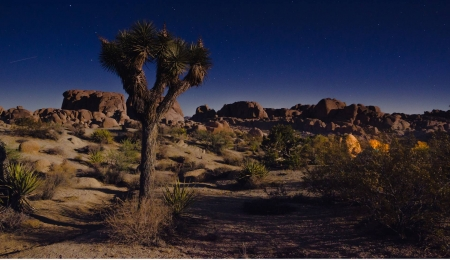 Joshua Tree - fun, desert, cool, nature, Joshua Tree