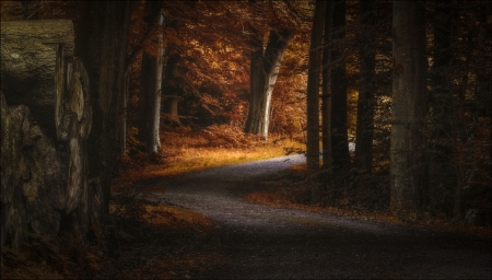 Forest Road - forest, trees, road, nature