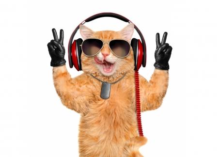 Cool Cat Cats Animals Background Wallpapers On Desktop Nexus Image 2173507
