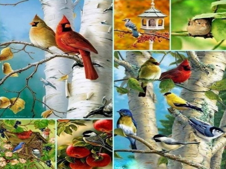 Collage of birds - birds, colors, feeders, collage, perch