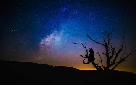 Dark night - stars, sky, cat, nature, tree