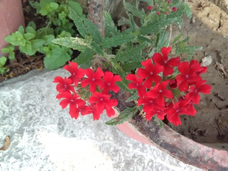 red flowers - flower, beautiful nature, red flower, nature walls