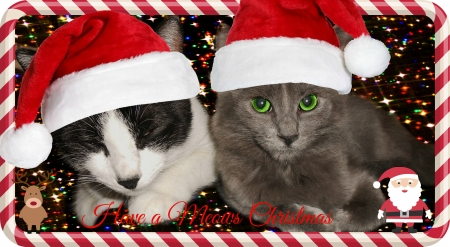My Cats Christmas - Christmas, Cats, Animals, Cat