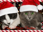 My Cats Christmas