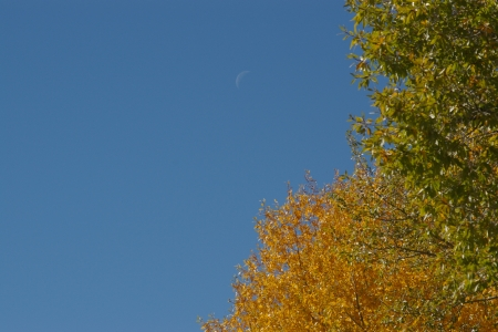 Crescent Moon in the Afternoon, Victor, Idaho - Fall, Mountains, Moon, Scenic, Autumn
