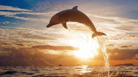 Dolphin Leap - sundown, dolphin, ocean, sunset, sky, Firefox Persona theme, sea