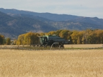 Gleaner on last Harvest, Victor, Idaho