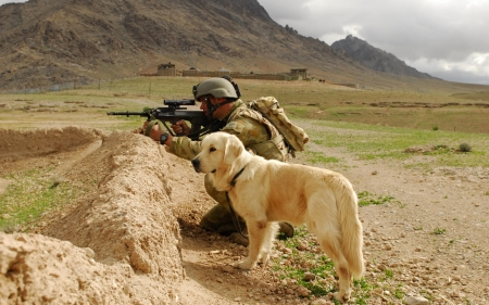 At War - cute, labradors, animals, dogs