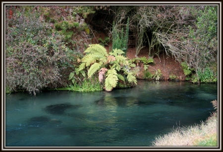 just a pond, Waikato, Nz - stream, ngatira, retreat, pond, new zealand, ferns, native, waikato, natural