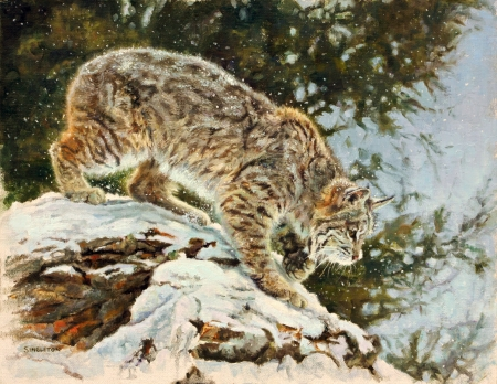 'The stalker'..... - nature, lynx, cats, animals