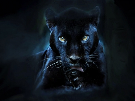 'Black panther'..... - panther, cats, animals, wild