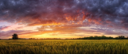 Field - landscape, sunset, clouds, Field, nature
