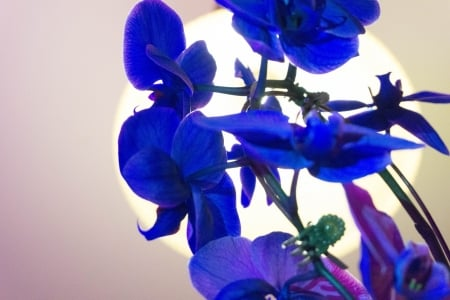 The beauty of a flower - flower, beautiful, purple, orchid
