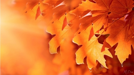 Drops of Fall - orange, rain, fall, leaves, Firefox Persona theme, dew drops, autumn, bright