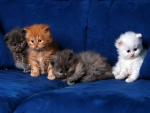 Four purrrfect kittens