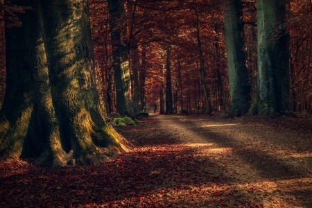 Shadowy Road in Autumn Forest - Fall, Trees, Forests, Shadows, Autumn, Roads, Nature