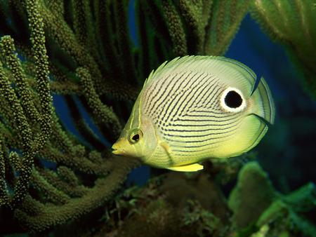 Underwater - cool, underwater