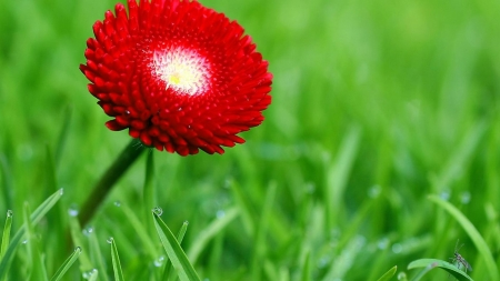 FLOWER - STEM, GRASS, PETALS, NATURE