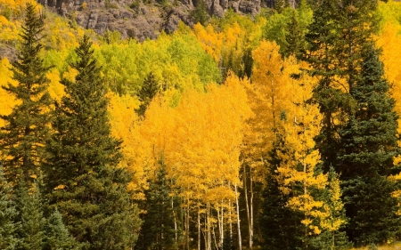 Green and Golden Trees in the Forest - forest, autumn, green, golden, nature, trees