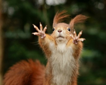 Wait squirrels animals background wallpapers on - Funny squirrel backgrounds ...