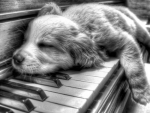 დAdorable Dog Sleeping In Pianoდ