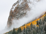 Foggy Forest Mountain Cliff in Autumn