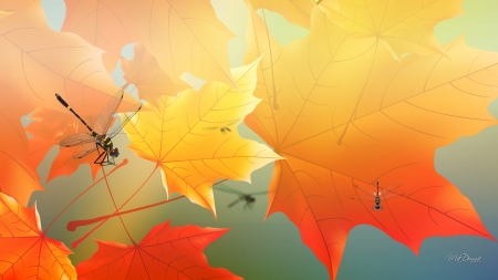 Maple Morning Dragonflies - fall, autumn, gold, leaves, orange, dragonflies, Firefox Persona theme