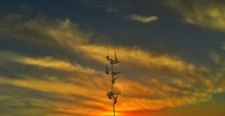 Sunset - photo, photography, wallpaper, nature, sunset, sky