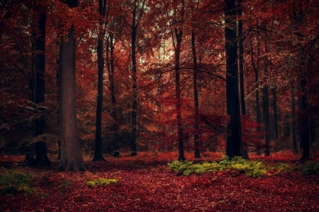 Red Fall Forest