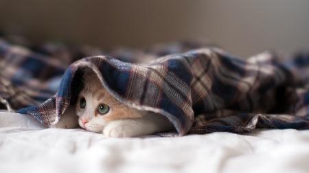 Hidden Kitten - Cats & Animals Background Wallpapers on Desktop Nexus  (Image 2185870)