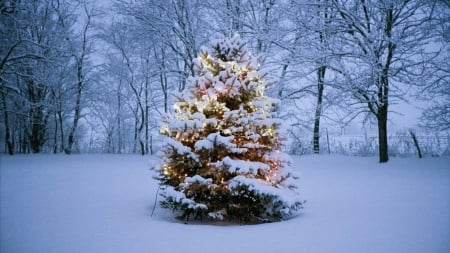 Xmas tree - tree, christmas, holiday, snow, winter