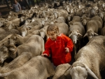 10 year old joins sheep in grazing rights protest in Madrid