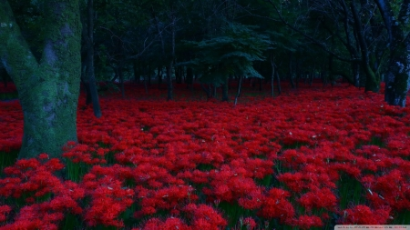 Red Flowers, Forest - flowers, red, forests, nature