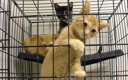 Business of animals in pet shop - cats, jail, gato, humour skz, chat, animal, chats, business, animals, pets, pet shop, pet, funny, kitten, cat, freedom