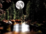 Moonlit in Forest