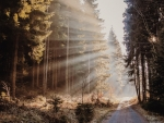 Sunbeams over Autumn Road