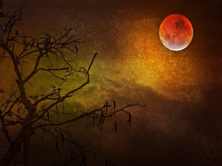 Red Moon - Trees, Night, Sky, Nature