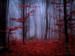 Red Autumn Foliage in Foggy Forest