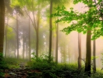 Earth's Foggy Forest