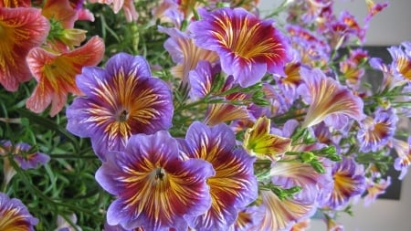 Beautiful Flowers - purple, orange, flowers, nature, pinks, ray