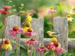 Pink and Gold - Goldfinches F1Cmp