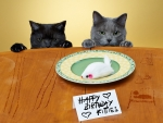 Happy Birthday, Kitties!