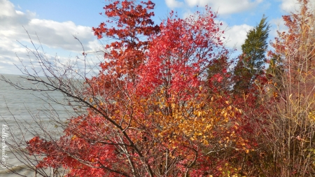 Canadian Autumn - scarlet, clouds, leaves, Canada, Lake Huron, fa11, Great Lakes, cie1, waves, trees, scarlets, water, twigs, blue sky, reds, Canadian, golden yellow, Autumn, branches