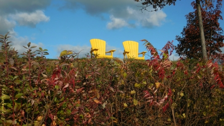 Come & Set for a Spell! :D - cie1, clouds, yellow chairs, tree, leaves, Canada, chair, blue sky, Canadian, fa11, Autumn